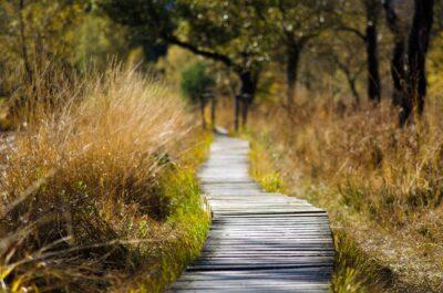 Samen wandelen tegen eenzaamheid